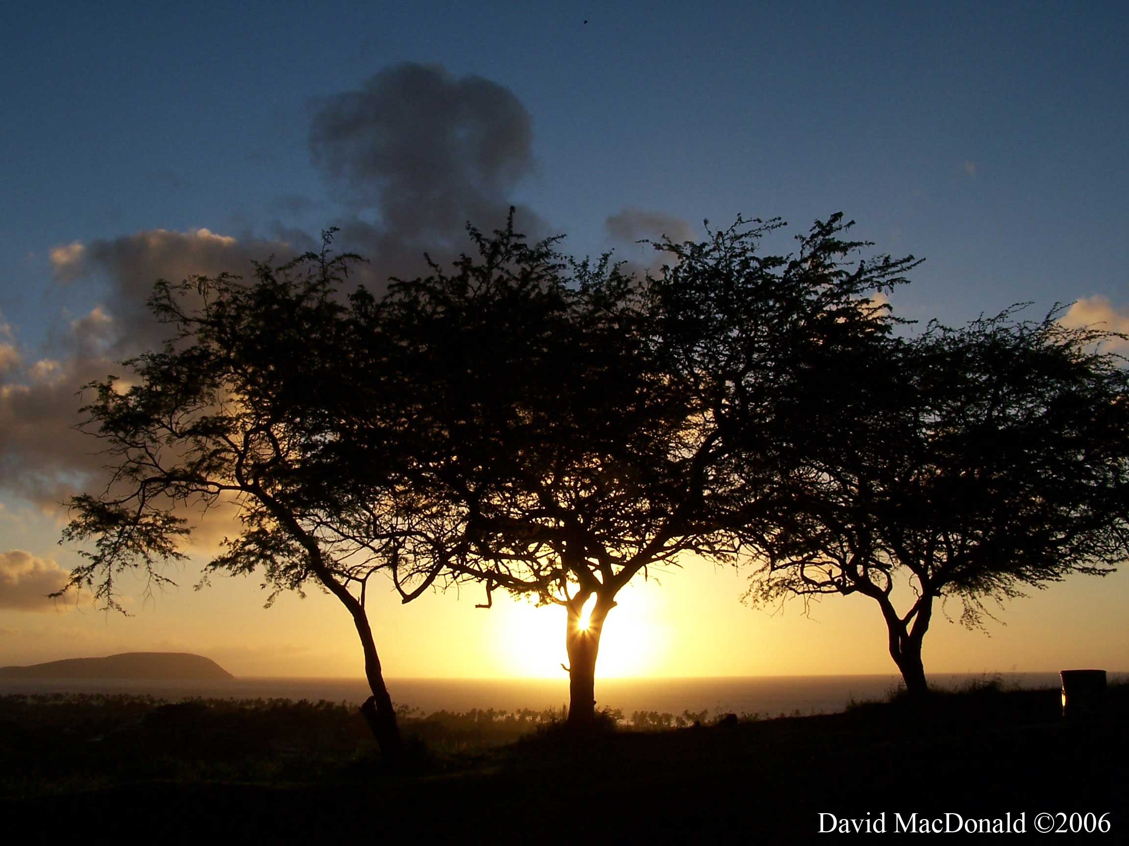 hawaii sunrise trees